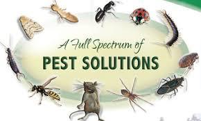 Pest Control Nederland TX