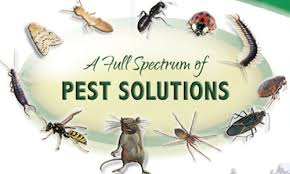 Pest Control Nederland TX, Exterminator Southeast Texas, Exterminator Texas, Exterminator SETX, Exterminator East Texas, Exterminator Golden Triangle, Exterminator Beaumont TX, Exterminator Port Arthur, Exterminator Nederland Tx, Exterminator Groves Tx,